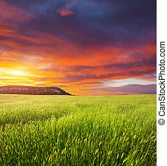 Green meadow on the sunset Composition of nature