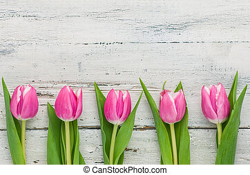 Pink Tulips on a white background with copy space