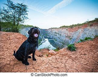 Beautiful mutt black dog on mountain rock. - Beautiful mutt...