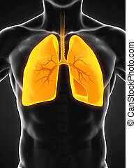 Human Respiratory System Illustration. 3D render