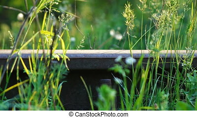 Overgrown grass railroad track spring