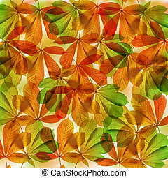 Background from autumn leaves of chestnut tree (Aesculus...