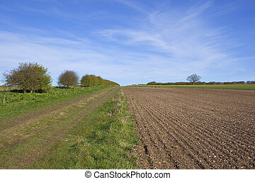 yorkshire wolds footpath in springtime - a country footpath...