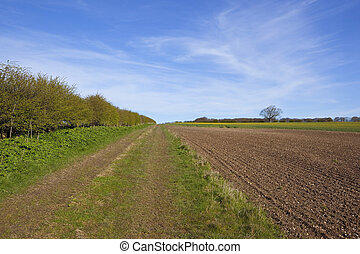 yorkshire wolds farm track in springtime - a grassy farm...