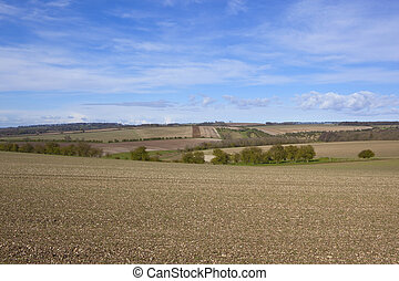 yorkshire wolds scenery in springtime - chalky plowed fields...
