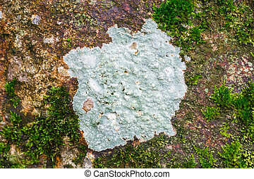 Lichen - Abstract lichen on stone in forest, ecology concept