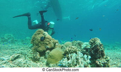 Scuba Diver underwater - Male scuba diver swimming...