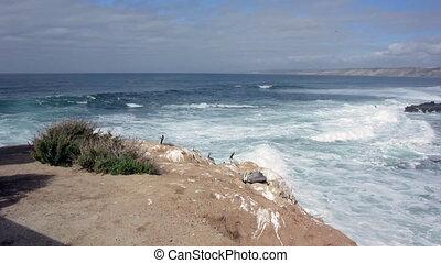 Pelicans Rest on Rocks Above Crashi