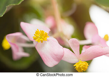 beautiful little pink flower close-up