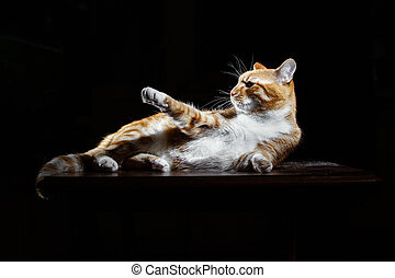 Orange Cat Lying Down on Isolated black background -...