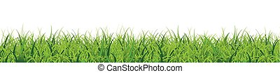 Grass White Background Header SH - Green grass on the white...