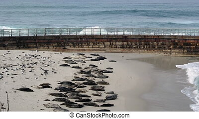 Seal Beach at Childrens Pool in La Jolla