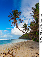 Seychelles, La Digue island - palm tree on background of...