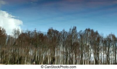 blue sky and a spring forest reflec - Trees reflected in...