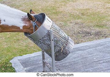 Horse Head in a Trash Can - Funny scene of a horse head in a...