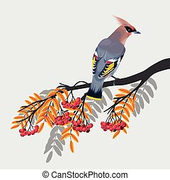 Waxwing on rowan branch - Vector illustration of waxwing on...