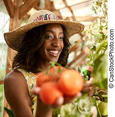 Friendly woman harvesting fresh tomatoes from the greenhouse...