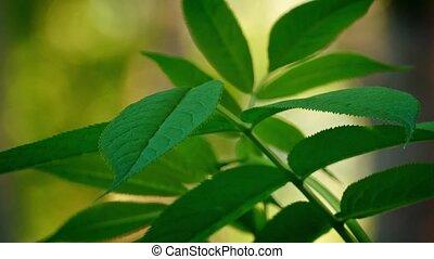Plant In Breeze In Forest Bokeh - Leafy plant in gentle...