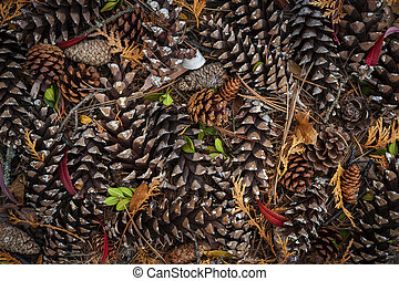 Pine cones - Various pine cones on forest floor, view from...