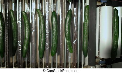 Cucumbers Are Moving To Packaging On Conveyor - Cucumbers...