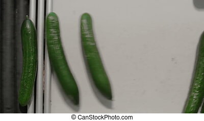 Cucumbers Are Spinning On Conveyor Line. Food Production