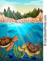 Turtles swimming under the ocean