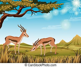 Two antelopes in the field