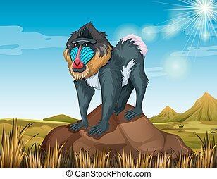 Baboon standing on rock illustration