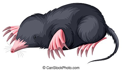 Mole with black fur illustration