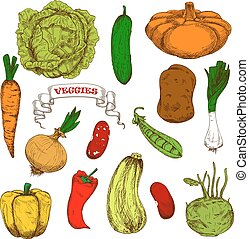 Engraving sketches of healthful organic vegetables -...