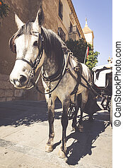 Traditional Horse and Cart at Cordoba Spain - travel...