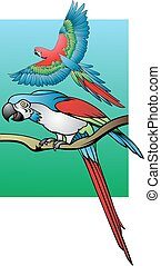 two parrots on color background - two colro parrots as very...