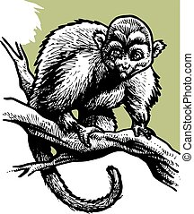 wild monkey in the black and white