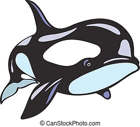 orca fish isolated on the white background