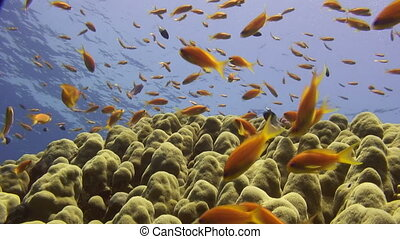 Coral reef marine life - Colorful sea life.
