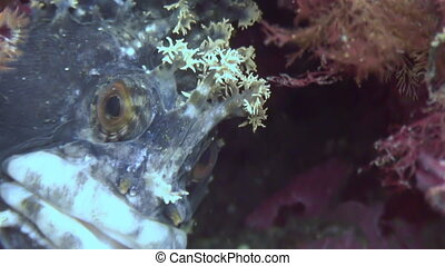 Fish dog hiding in the rocks on the seabed Amazing...