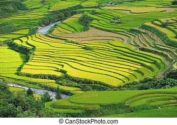arroz,  sapa, Vietnã, Terraços