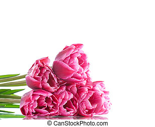 Beautiful bouquet of red tulips isolated on white background...