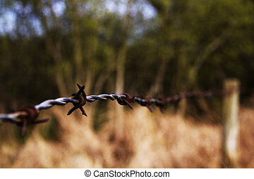 Barbed wire fence along edge of a field