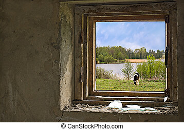 Countryside with cow on meadow nere the river. View through...