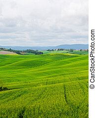 Beautiful summer rural landscape with wavy hills, Tuscany,...