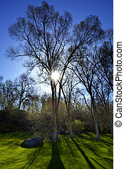 Trees Sunlight Shadows Park Green Grass - Trees in spring...