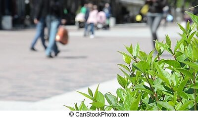 Green plants swaying while people passing by in the unfocused background
