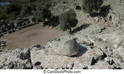 A tortoise looking down from near the top of antique...