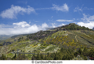 Inland Gran Canaria, Canary Islands, April, Flowering slopes