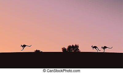 kangaroos - Kangaroos on the sunset background