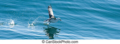 Seagull trying to catch a fish in the blue ocean
