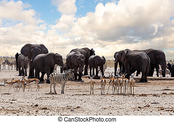 full waterhole with Elephants, zebras, springbok and orix...