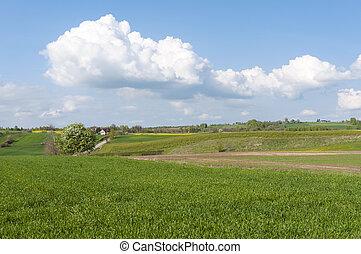 Rural Landscape Eastern Poland
