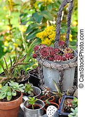 succulent plant potting - collection of succulent plant in...